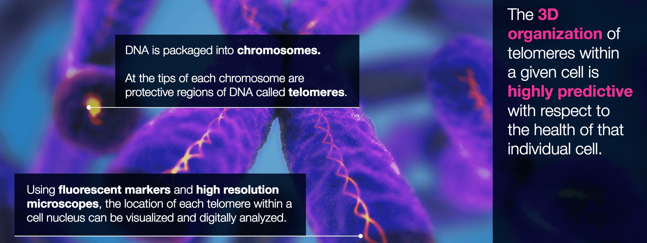 3d-telomeres